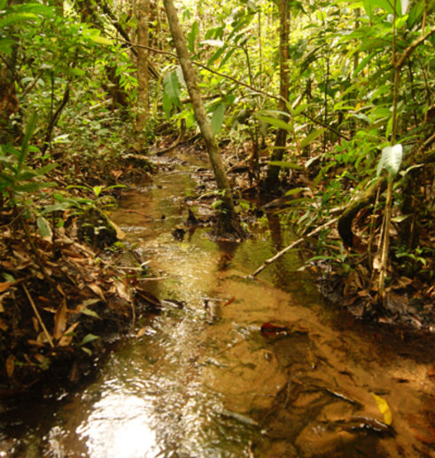 Na floresta preservada, as copas das árvores mantêm a temperatura da água mais fresca. Foto: Cedida pelo pesquisador