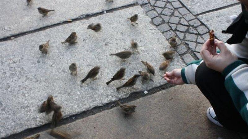 Pássaros encontram ampla oferta de comida nas grandes cidades