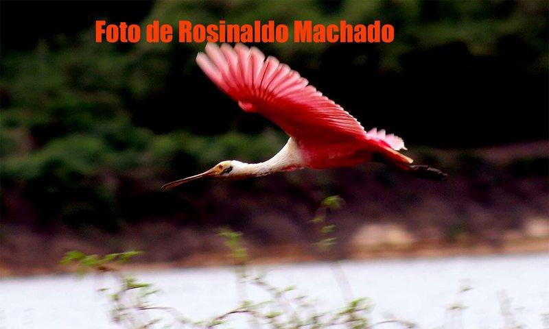 Foto de Rosinaldo Machado, no Vale do Guapore - RO.