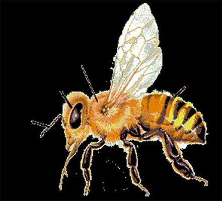 É possível salvar as abelhas? Petição com 5 milhões de assinaturas diz que sim.