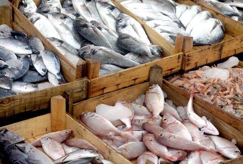 Suspensa a exportação de pescado do Brasil para a União Europeia