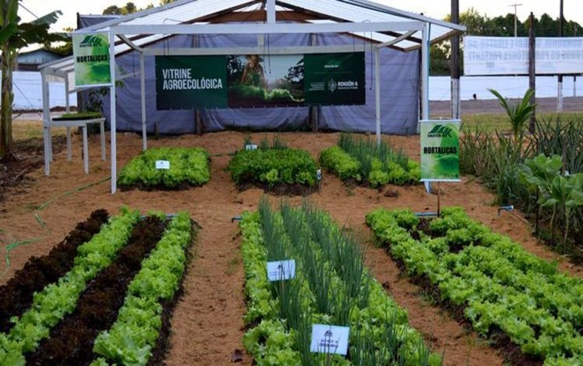 Emater-RO mostrará perspectivas para setor produtivo durante 7ª Rondônia Rural Show