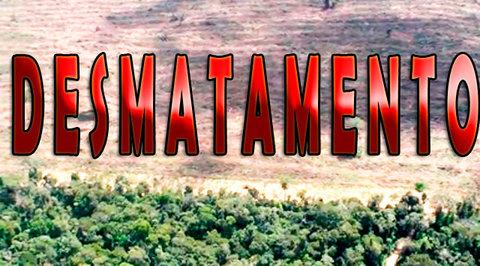 Desmatamento ilegal abate área recorde de floresta em 7 Terras Indígenas entre RO e MT