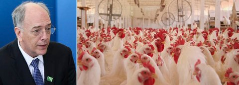 Caos de Parente pode matar 1 bilhão de aves e destruir indústria de alimentos