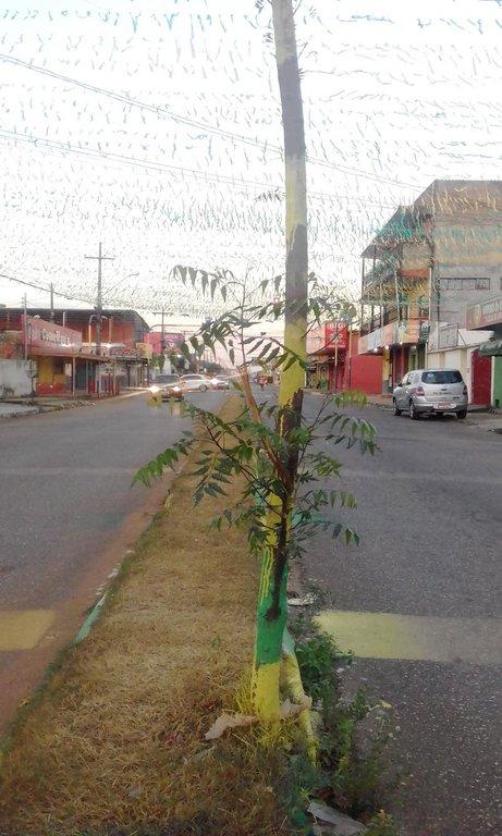 Árvore agredida na Copa do Mundo sobrevive na ressaca da Avenida Calama - Gente de Opinião