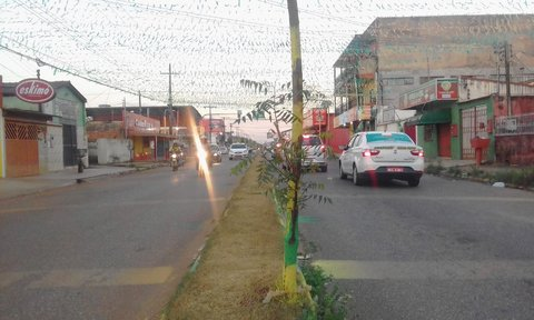 Árvore agredida na Copa do Mundo sobrevive na ressaca da Avenida Calama