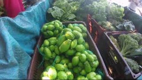 ROLIM DE MOURA-RO: Produtor aposta no cultivo de hortaliças (VÍDEO)