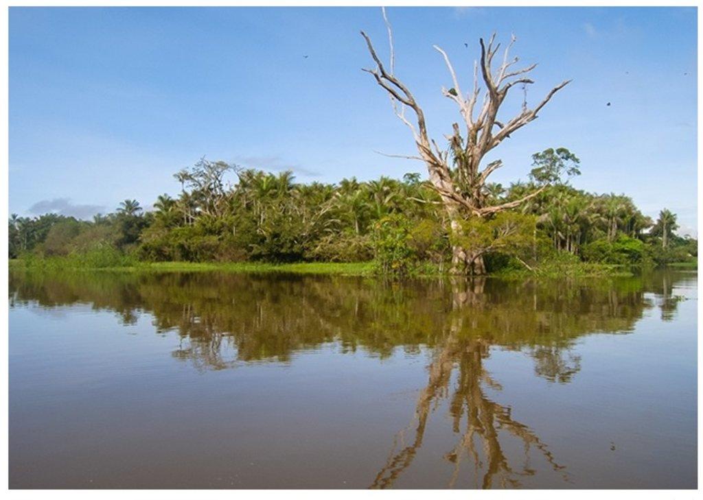 Compilação de dados de inventários florestais e coleções biológicas gerou lista com 3.615 espécies de árvores nas áreas úmidas da bacia amazônica (foto: Thiago Sanna Freire Silva) - Gente de Opinião
