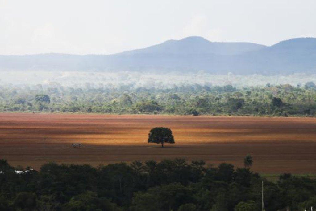 Dia do Cerrado passou em branco no País - Gente de Opinião