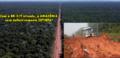 BR-319, uma estrada inútil - Por Professor Nazareno