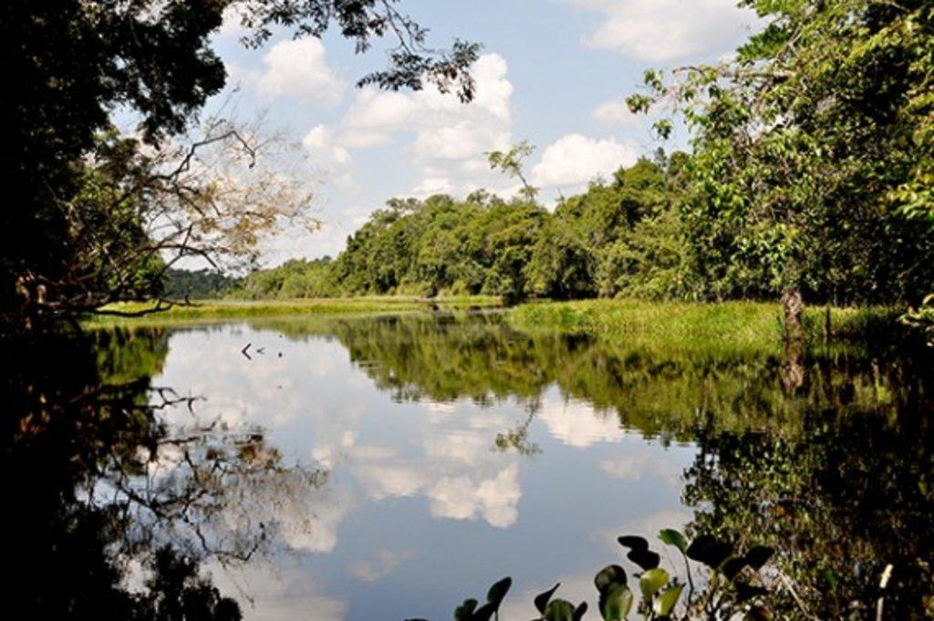 Governo pede extinção de reserva da Gleba Soldado da Borracha e ALE acrescenta emenda incluindo outras 10    - Gente de Opinião