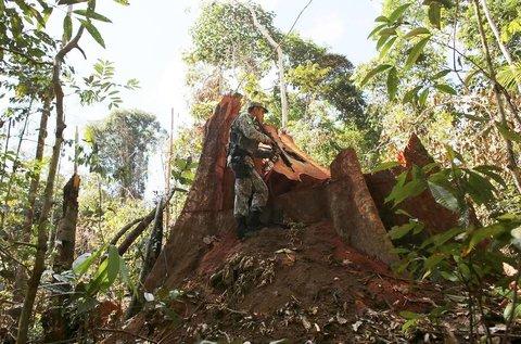 Sofre, Amazônia - Por Lúcio Flávio PInto