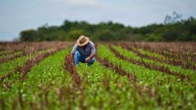 Meio Ambiente incorporado à Agricultura não deu certo antes, mas Bolsonaro insiste na proposta - Gente de Opinião