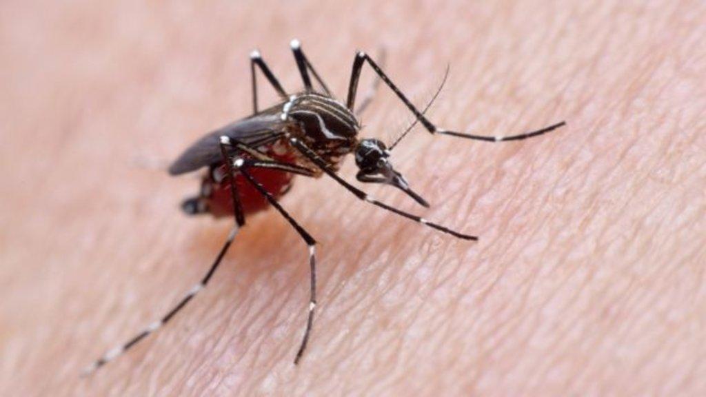 Atualmente, Zika é considerada doença endêmica e urbana no Brasil, transmitida apenas pelo mosquito Aedes aegypti - Gente de Opinião