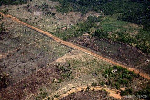 Rondônia no ranking do desmatamento