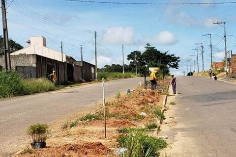 Ji Paraná: Semeia e Juizado Especial formam parceria para arborização urbana