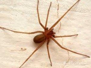 Justiça do Trabalho concede indenização e pensão a trabalhador que teve graves lesões por picada de aranha venenosa em canteiro de obra - Gente de Opinião