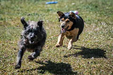 Deumilivi, viterinaro: Vai, logo, minino, levá esse cachorro ao viterinaro!