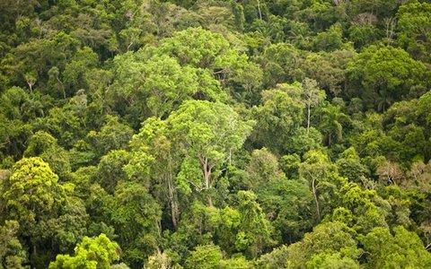 Estudo revela falta de transparência sobre terras públicas em oito estados amazônicos