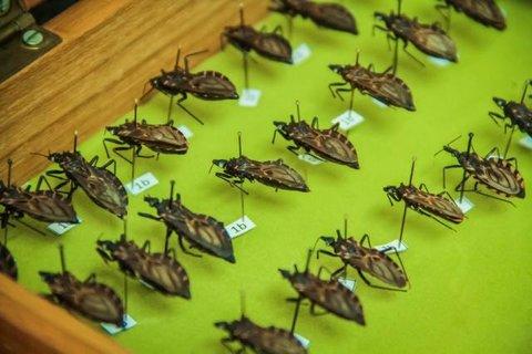 Rondônia: Três besouros foram confirmados infectados com doença de Chagas em 2018