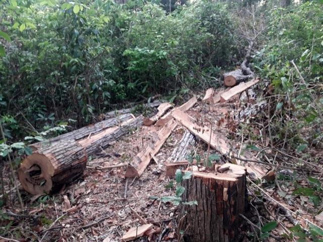 Invasões em terras indígenas aumentam no governo Bolsonaro, segundo a TV 247 - Gente de Opinião