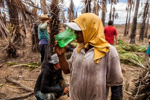 Trabalho escravo: Dados da Inspeção revelam perfil dos resgatados