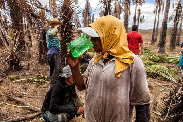 Trabalho escravo: Dados da Inspeção revelam perfil dos resgatados - Gente de Opinião