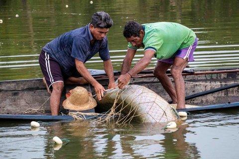 Instituto Mamirauá oferece curso de manejo de pirarucu na Amazônia