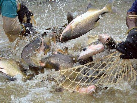 Rondônia lidera produção nacional de peixes nativos