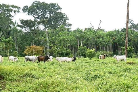 Como fica a Amazônia, Sr. Presidente?