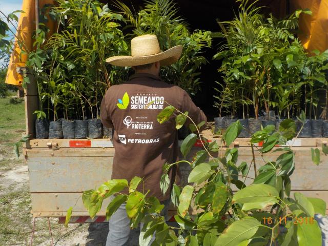 Projeto Semeando Sustentabilidade 4 já distribuiu mais de 180 mil mudas para recuperação de áreas - Gente de Opinião