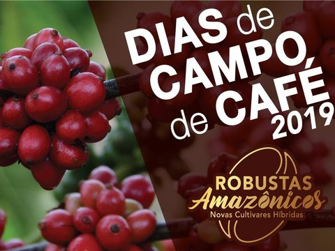 Embrapa apresenta novas cultivares híbridas de café em dias de campo em Rondônia e Acre