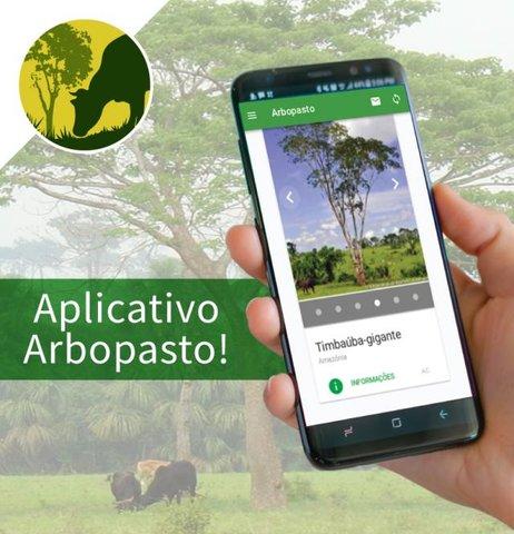 A Embrapa e a UFMS disponibilizam  aplicativo que ajuda a escolher a árvore certa para a pastagem - Gente de Opinião