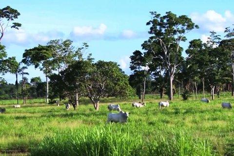 A Embrapa e a UFMS disponibilizam  aplicativo que ajuda a escolher a árvore certa para a pastagem