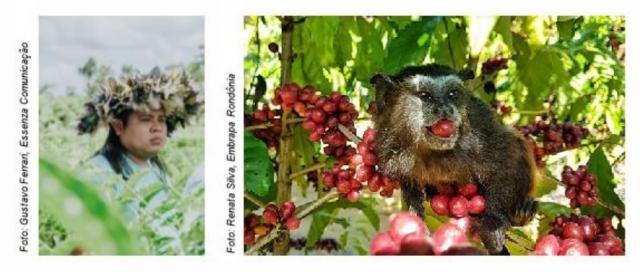 Grupo 3corações lança projeto que une três grandes riquezas do Brasil: a cultura indígena, o café e a floresta amazônica - Gente de Opinião