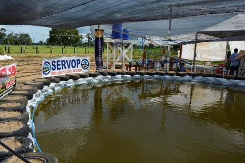 Produção de peixe é incentivada pelo Sebrae