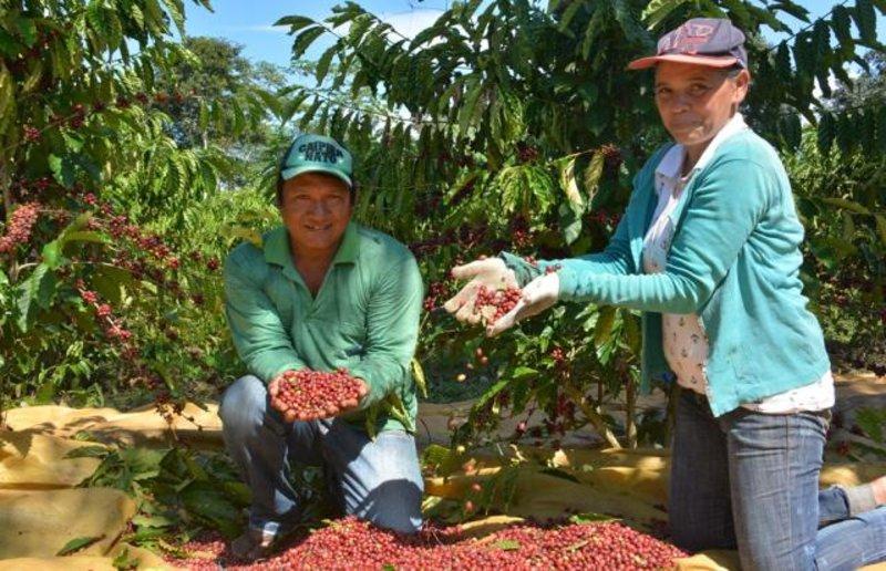 EMBRAPA - Pesquisa ajuda indígenas a produzir café com qualidade
