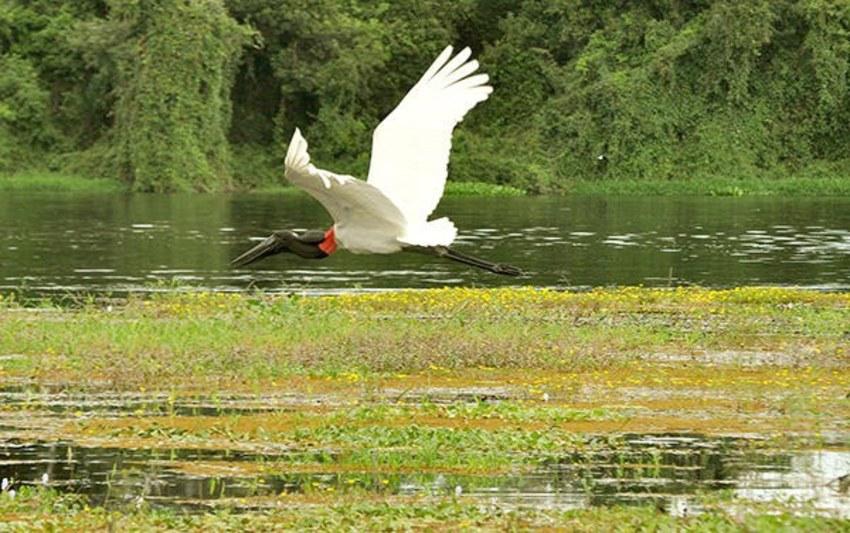Atrações turísticas de RO:  Parque Estadual Corumbiara - Jornalistas do Grupo SGC recebem  Moção de Aplausos na Câmara