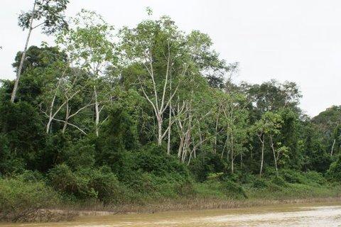 """Áreas prioritárias para conservação ambiental foram """"deletadas"""" do site do Ministério do Meio Ambiente"""