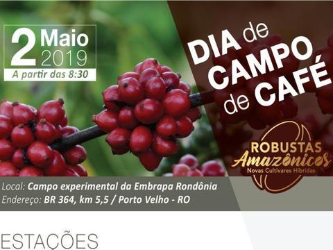 Embrapa apresenta novas cultivares híbridas de café em dia de campo em Porto Velho