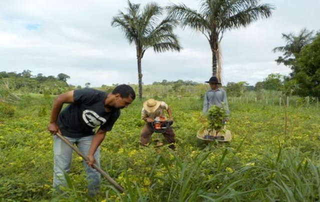Projeto Plantar: mais de 800 hectares de áreas foram cadastradas para recuperação em Rondônia - Gente de Opinião
