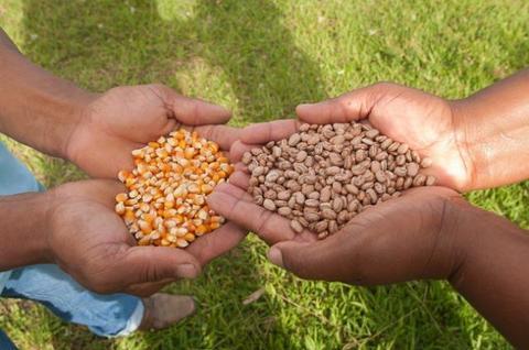 Rondônia: Conab pode adquirir sementes de milho e feijão de agricultores familiares do estado