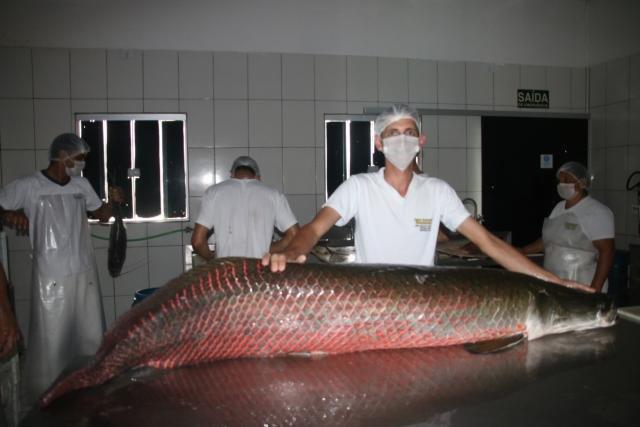Agroindústria em Vale do Paraíso se destaca na venda de pescados - Gente de Opinião