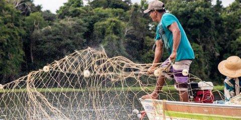 Projeto de Indicação Geográfica do Pirarucu de Manejo de Mamirauá avança com criação de organização gestora