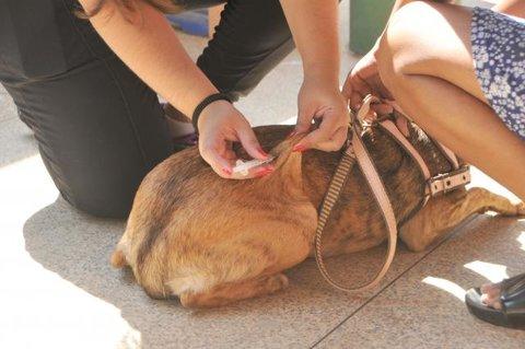 Semusa amplia vacinação de cães e gatos em Porto Velho
