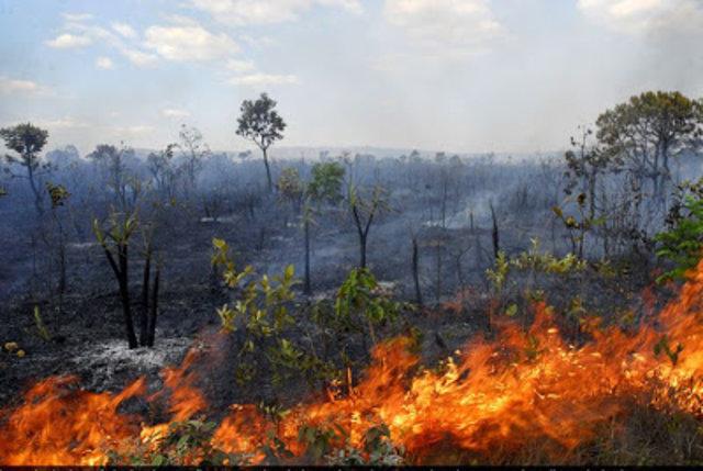Florestas na Amazônia pós-fogo demoram sete anos para recuperar funções  - Gente de Opinião