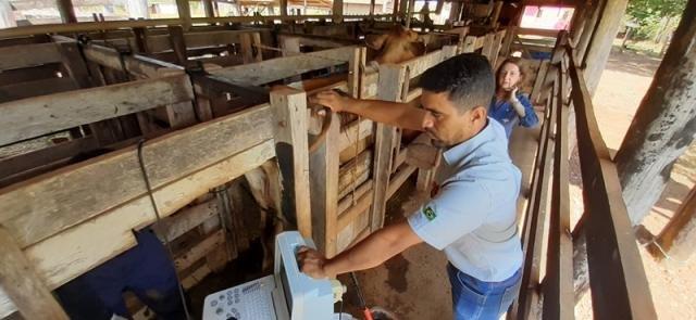 Programa de Melhoramento Genético beneficia mais de 120 empresários rurais - Gente de Opinião