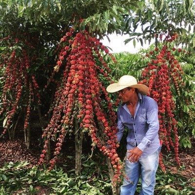 Rondônia realiza o maior concurso de café robusta do Brasil; premiação soma R$ 40 mil