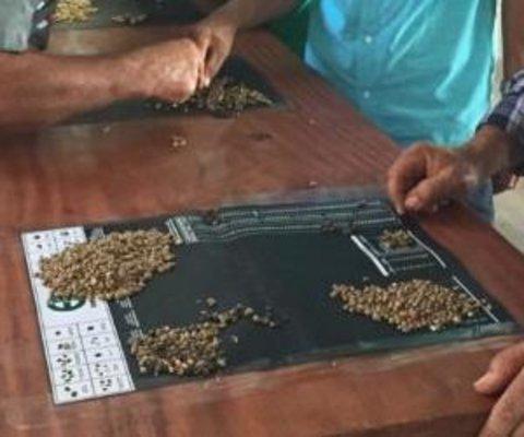 Cafeicultores de Rondônia são capacitados em Classificação Física e Análise Sensorial do Café
