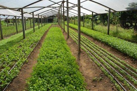 Nova formatação de produção rural garantirá sustentabilidade em Porto Velho